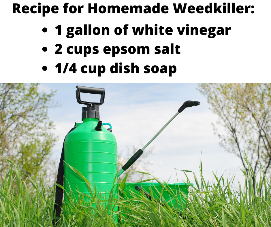 Homemade Weed Killer - Beat Your Neighbor